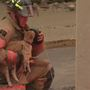 Fire crews save cat's life at Sangamon Towers fire