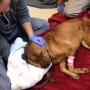 VIDEO: Dog found nearly dead in North Charleston, covered in ants & fleas