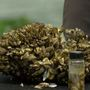 City of Austin on alert after zebra mussels found in Lake Travis