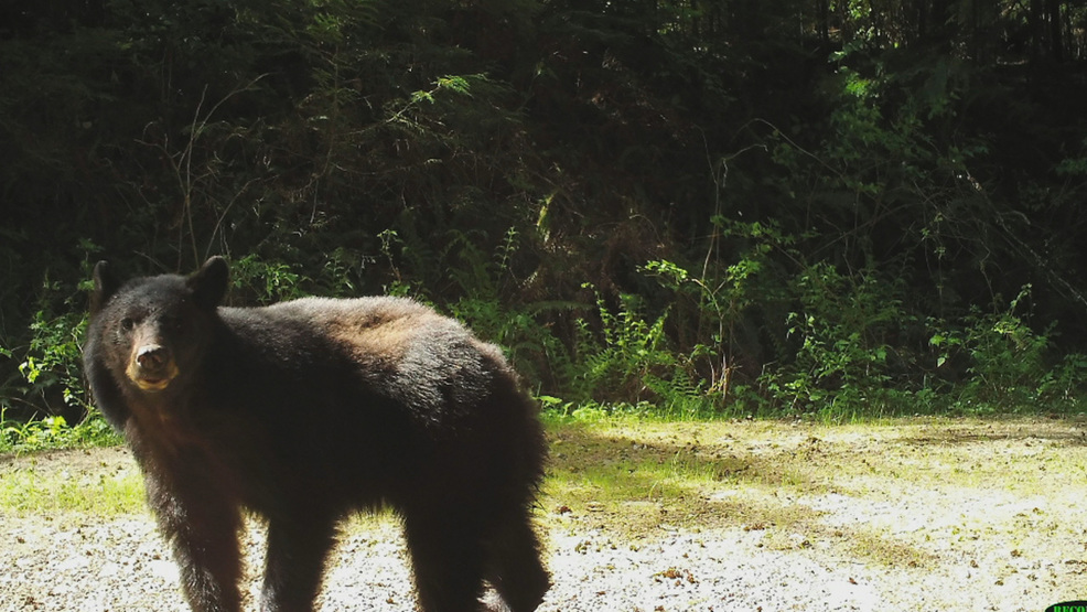 Local project documenting wild animals in residential areas