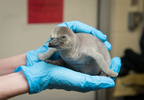 Penguin Chick 2574 - Grahm S. Jones, Columbus Zoo and Aquarium.jpg