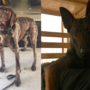 APD and WilCo seeking names for their K9s