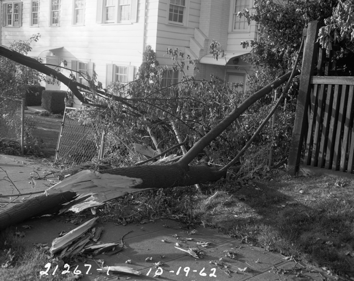 Colum us Day Storm Damage: 906 E. Highland Drive in Seattle. (Photo: Seattle Municpal Archive)