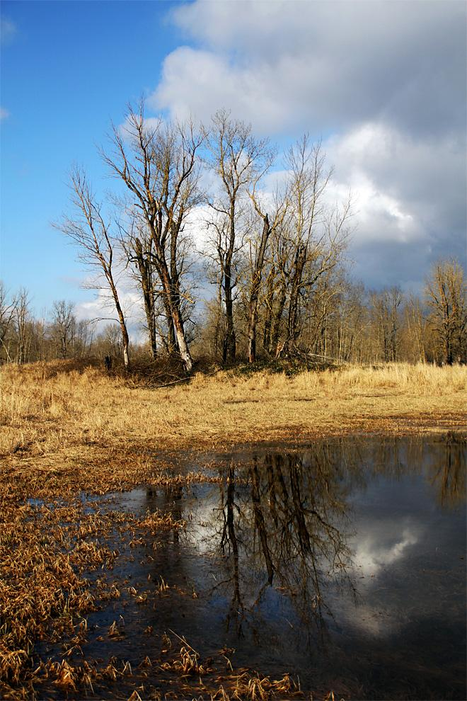 Reflection at Sandy River Delta (Photo courtesy YouNews contributor: Avulgan)