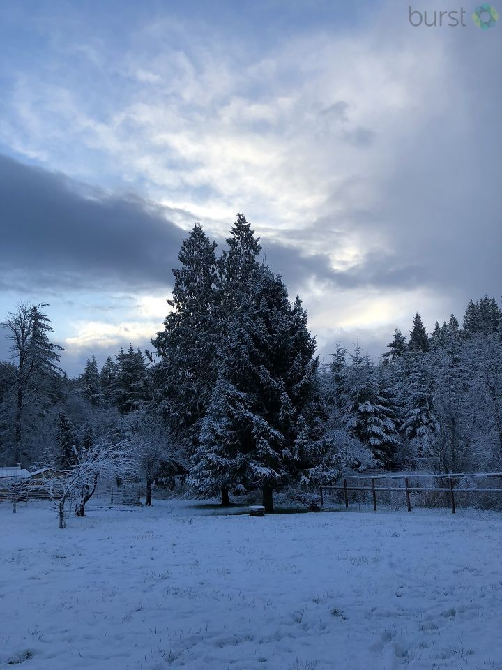 Snow photo from Samantha Anderson in Clatskanie, Ore.jpg