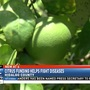 $116 million in federal funds allocated to help combat citrus disease, fruit flies
