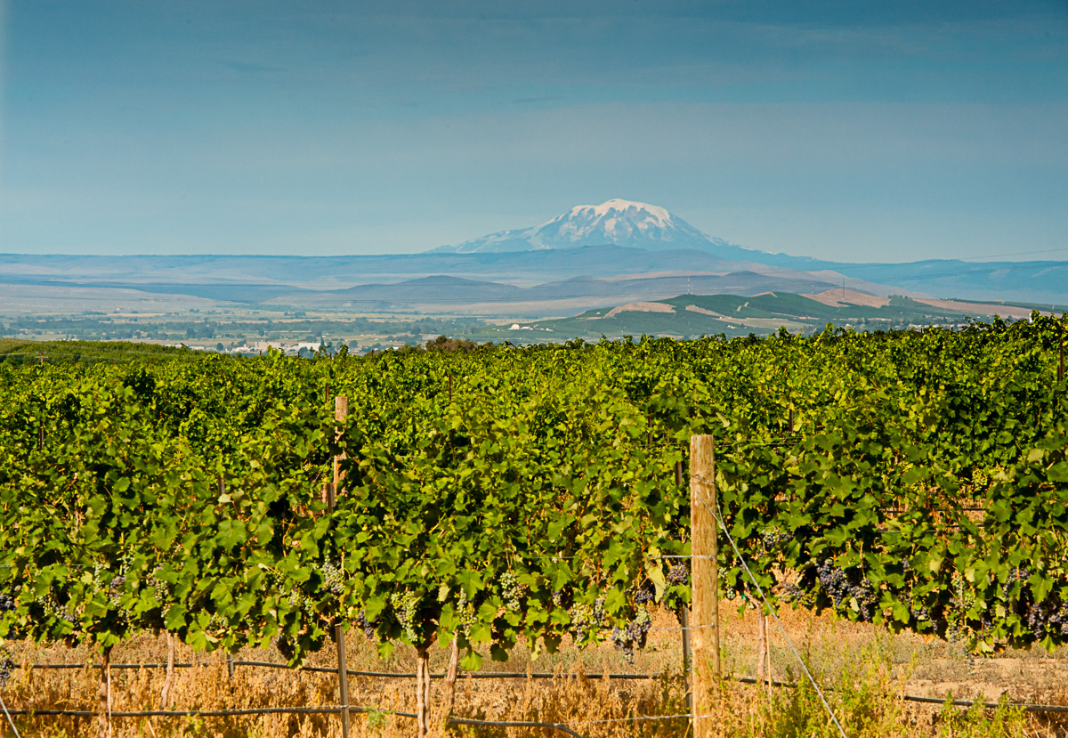 Boushey Vineyard (Image: Courtesy Richard Duval)