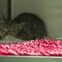 Kitten rescued after being found in a car engine at a Starbucks drive-up