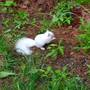 Rare white squirrel makes appearance in South Berwick