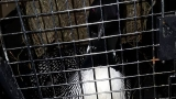 Loon rescued in northern Wisconsin