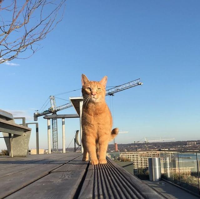 This cat is avoiding the furlough by heading to new heights. (Image via @acatnamedelephant)
