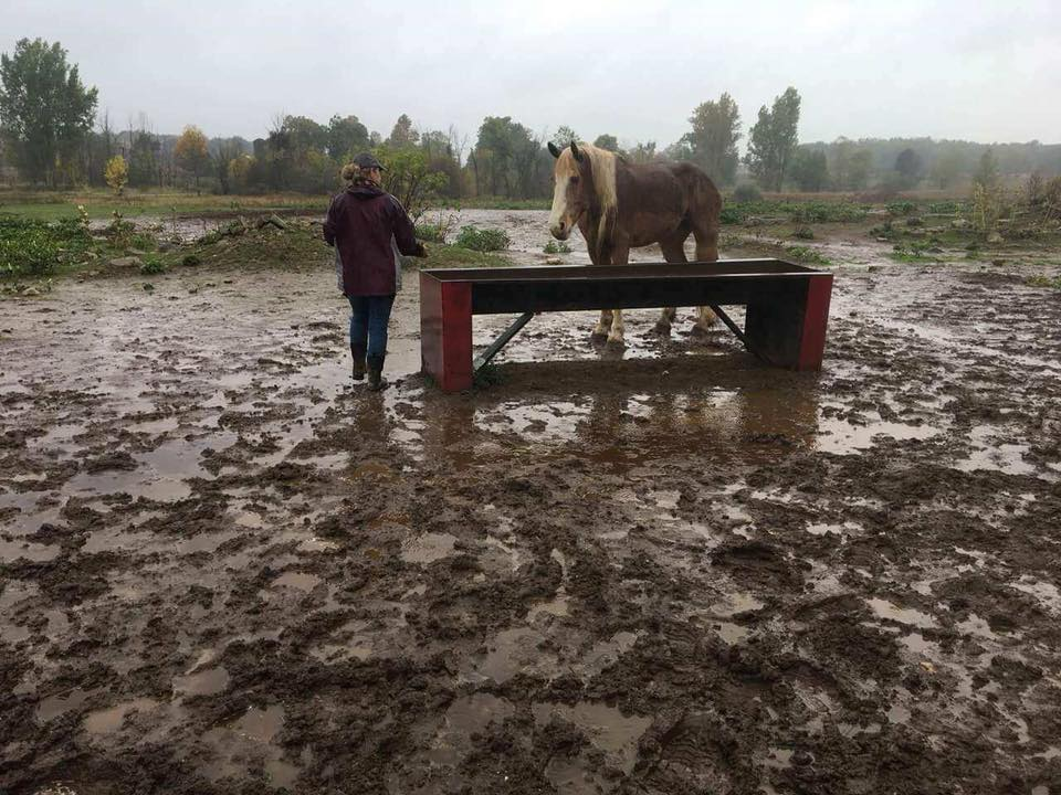 Shiawassee County Sheriff said it appears as if the horses were malnourished. (Photo from Shiawassee County Sheriff)