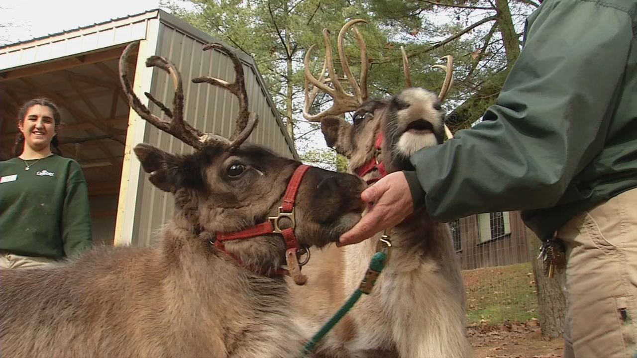 One of the female reindeer is 8 months old, the other is a year and a half. (WCHS/WVAH)<p></p>