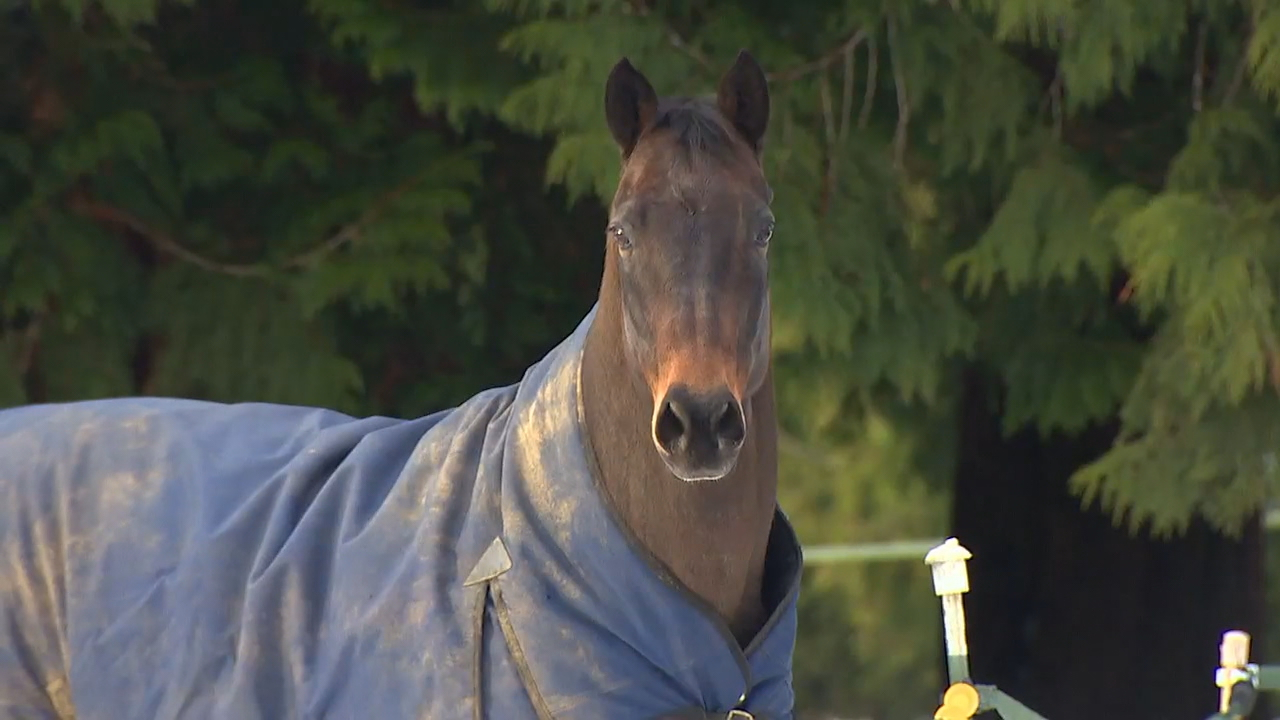 Horse owners are on alert after a fatal virus was discovered at an equestrian center in Woodinville. (KOMO News)<p></p>