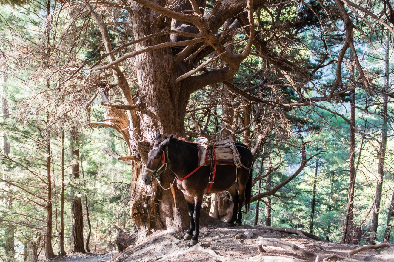 Mules are posted along the 16km Samaria Gorge hike to aid distressed travelers.