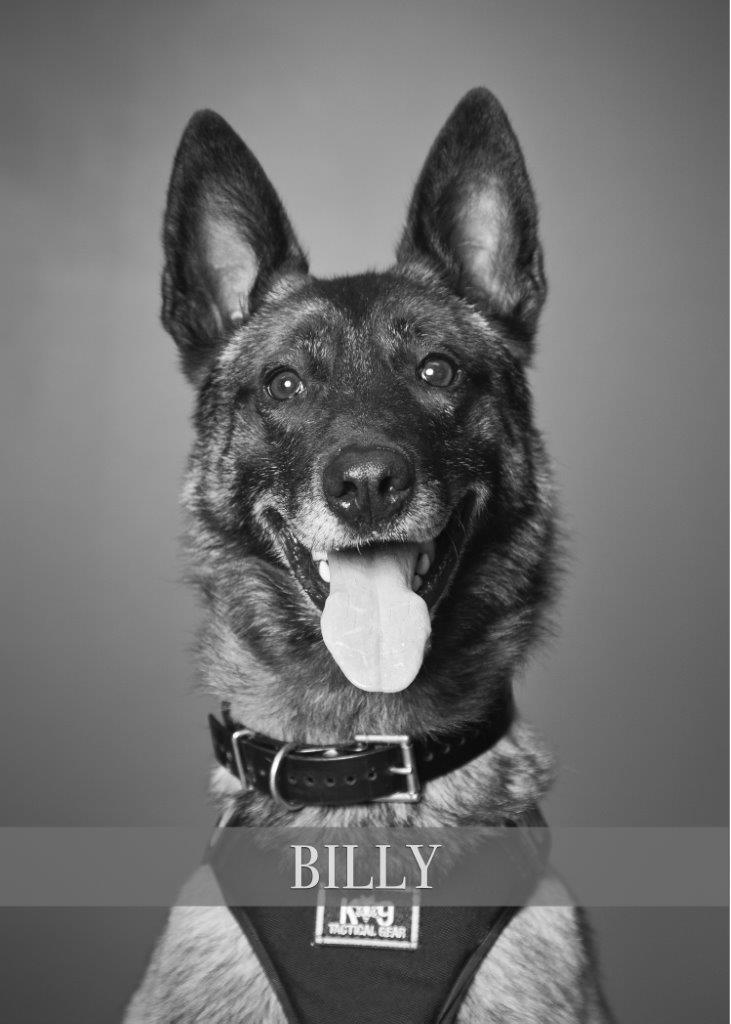 Hillsboro Police K-9 Billy suffered traumatic injuries when the patrol car he was traveling in was struck by another driver on Dec. 4, 2017. He was euthanized, police said. Photo courtesy Hillsboro Police Department{ }