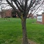 Police investigating after noose found hanging in tree outside E.C. Glass High School