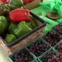 Freshness Giveaway at Quincy Mall Farmer's Market