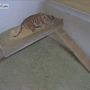LIVE: Tiger Cub Cam at the Oklahoma City Zoo