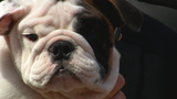 Bryant rolls out red carpet for Tupper II