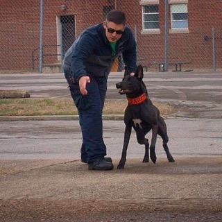Photo: Nero prior to being struck by a car on Thursday, Jan. 11th Source: Mobile Fire Rescue Department