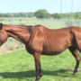 Malnourished horse recovering, colt dies, after being rescued from Siouxland residence
