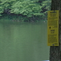 Toxic green algae found in 2 Montgomery County lakes, again
