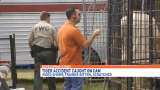 Federal investigation shuts down tiger show