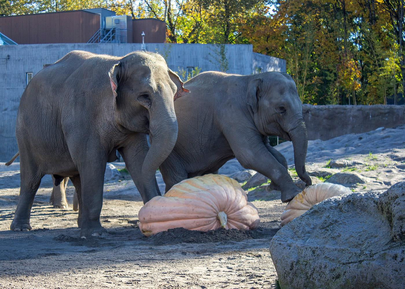"<p>On Friday and Saturday, Nov. 10-11, veterans, active-duty service members and their families can visit the Oregon Zoo free of charge.</p><p>""We're grateful to everyone who has served our country and the families who support them,"" said Dr. Don Moore, zoo director. ""We're also grateful for Walmart's continued support, which ensures that more of our community can visit the zoo and be inspired to take action for wildlife.""</p><p>To receive free admission Friday, Nov. 10, and Saturday, Nov. 11, visitors must show a military or veteran organization ID, discharge papers or other official military identification; families of deployed military personnel must show an active duty ID.</p>In addition, the zoo store is offering a 10 percent discount and all zoo food outlets are offering a 25 percent discount for veterans, active military personnel and their families, with proper identification. Photo by Amanda Butt"