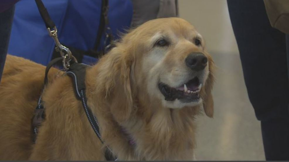 Remembering 9/11: Therapy dogs bring comfort to Boise Airport travelers