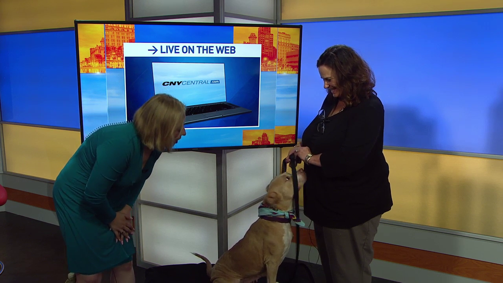 CNY SPCA's Ginger is ready for adoption | WSTM