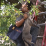 Cat freed from tree after being trapped for 5 days
