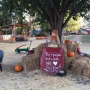 Local pumpkin patch uses proceeds to feed hungry children
