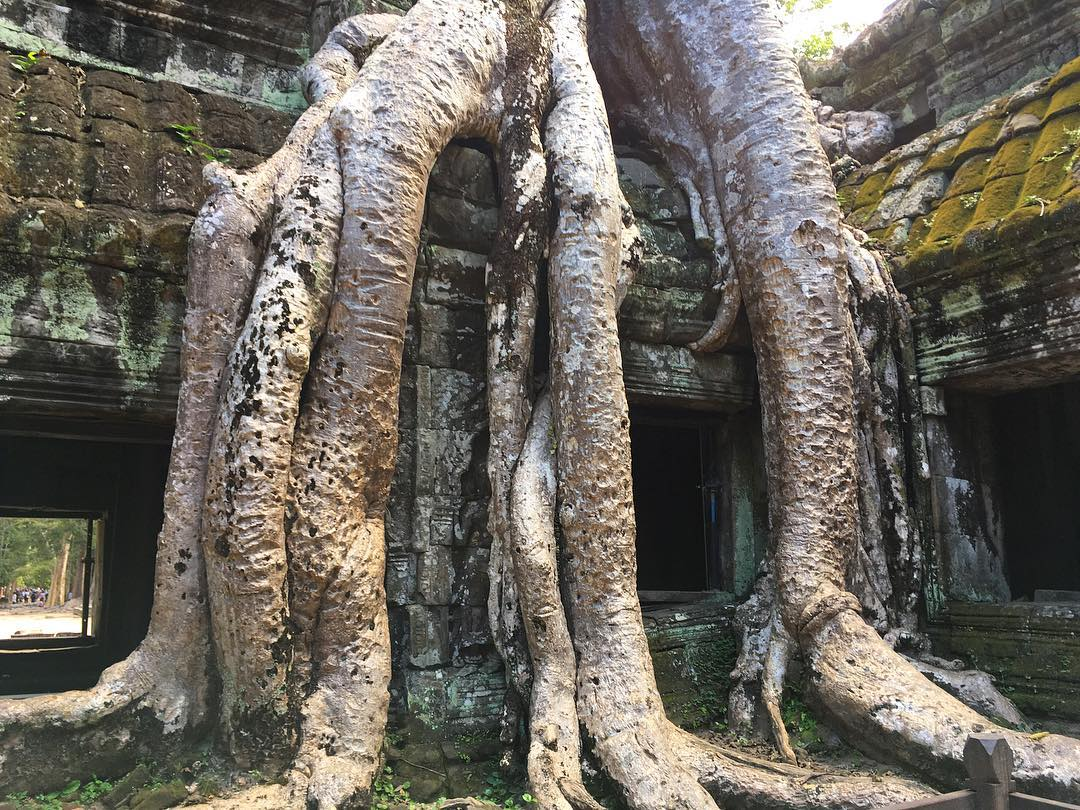 IMAGE: IG user @m4tleena / POST: Tomb raiding at the temple where the trees have taken over // PUBLISHED: 12.2.16