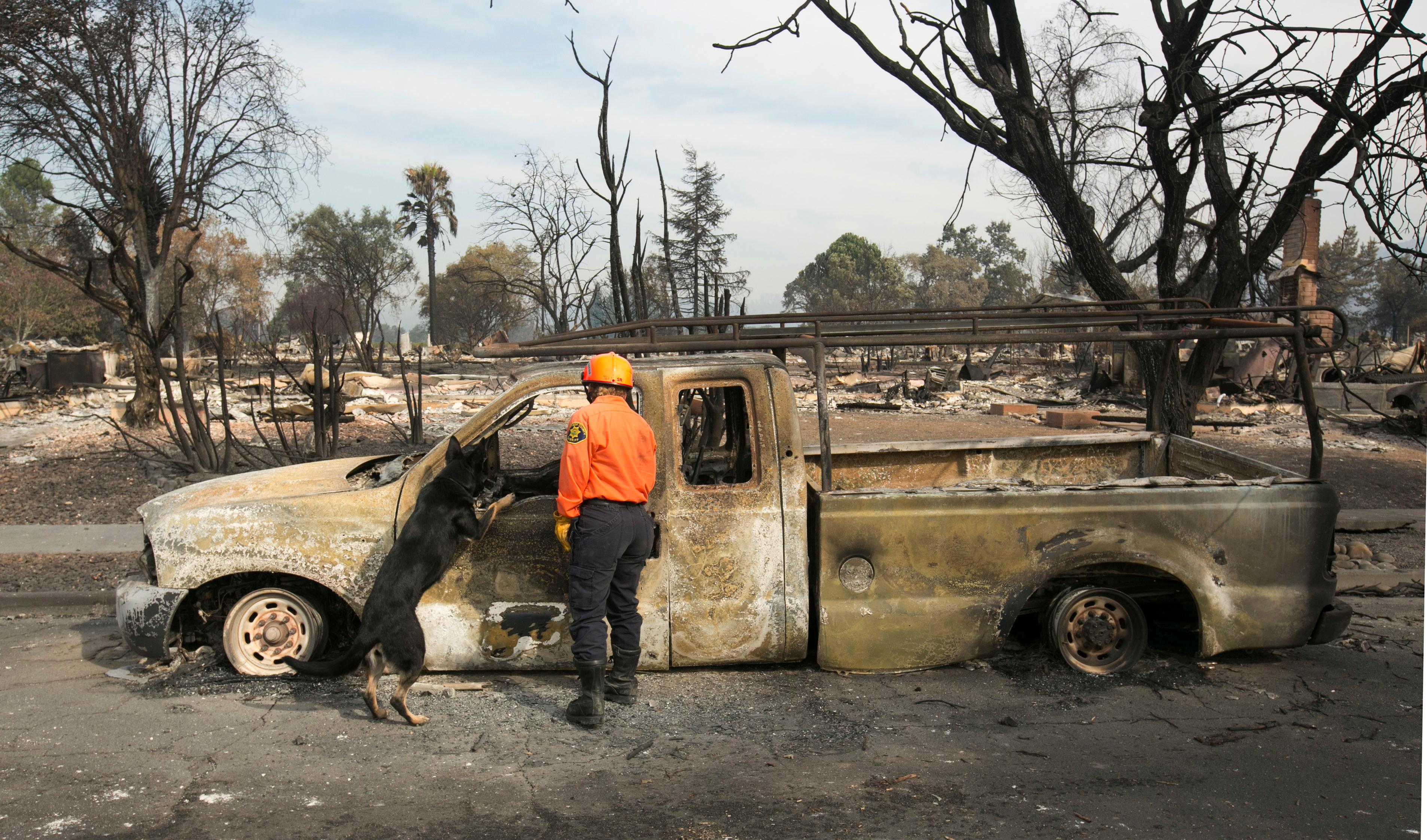 Shay Cook, of the Alameda County Sheriff's Office Search and Rescue team and her search dog, Zinka inspect a burned out pickup while searching the Coffey Park area Tuesday, Oct. 17, 2017, in Santa Rosa, Calif. A massive wildfire swept through the area last week destroying thousands of housing and business and taking the lives of more than two dozen people.(AP Photo/Rich Pedroncelli)