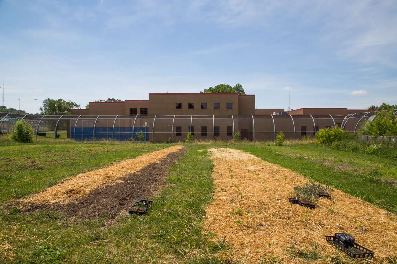 The Camp Washington Urban Farm with River City Correctional Facility's in its background. Inmates finish their sentences with a period of community service throughout Camp Washington. / Image: Catherine Viox // Published: 7.21.17