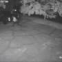 VIDEO: Bibb Co. deputies ask for public's help finding burglary suspects