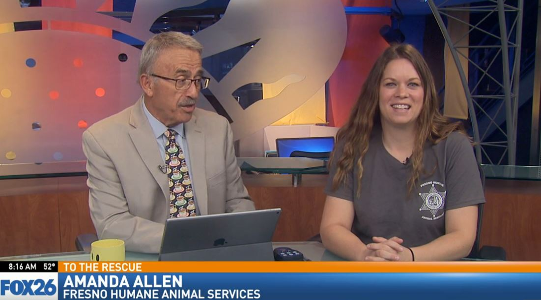 Amanda Allen with Fresno Humane Animal Services visited Great Day to talk about what to do with unwanted animals