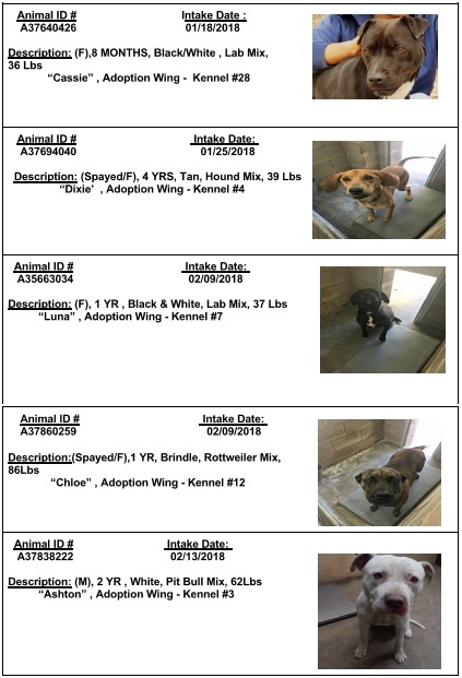 Here are the five dogs who were saved from being euthanized by a Good Samaritan who paid their adoption fees.<p></p>