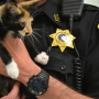 Stolen 10-week-old kitten located by Lollypop Farm