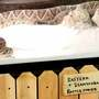 OKC Rattlesnake Museum opens in The Stockyards