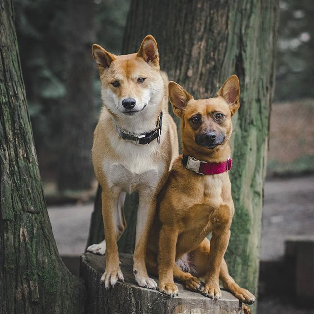 6. Two City Dogs (9,600 followers): Ellie and Kato are a winsome duo and best buds that try to get out in nature as much as possible. These city dwelling doggies are as much at home in the great outdoors as they are in the city - follow their frequently updated adventures on Instagram for gorgeous shots snapped outside city limits. (Image: @twocitydogs / instagram.com/twocitydogs)