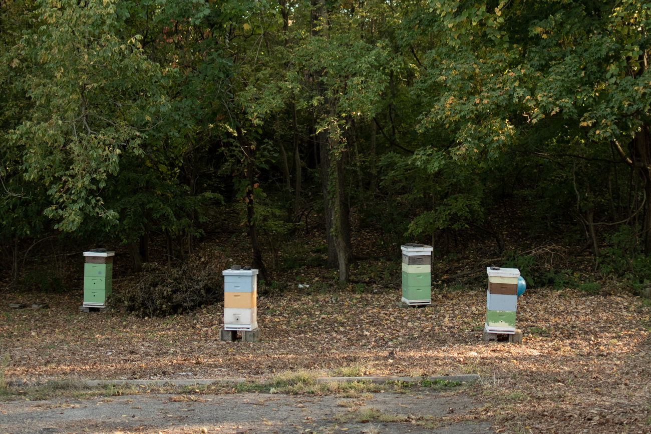 Bee hives at the back of the property are part of the farm. / Image: Shea Renusch // Published: 11.3.20