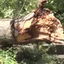 """That's the nature of the beast"" Logger says trees more likely to uproot with recent rain"