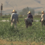 Housing in-demand for seasonal farmworkers in Yakima Valley