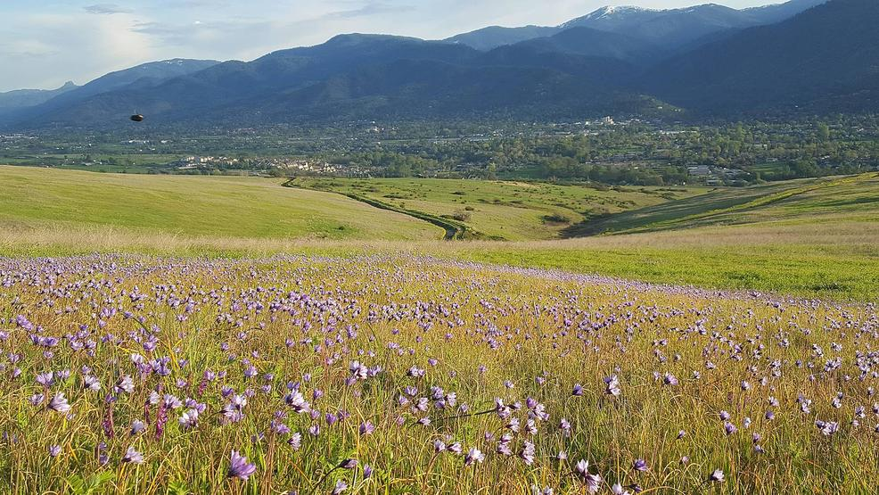 1004687149 imperatrice property Native flowers and view Mt A_SOLC.jpg
