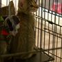 Wilco animal shelter celebrates after community goes above and beyond to adopt 100 cats