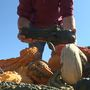 Roba Family Farms picking pumpkins for 25 years