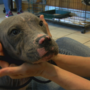 Humane Society asks for help after puppy thrown from car