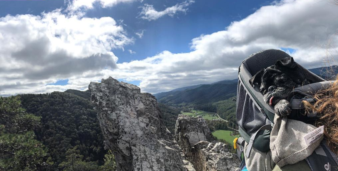 Not every hike is dog friendly, but they'll appreciate the view either way. (Image via @laurenafritts)